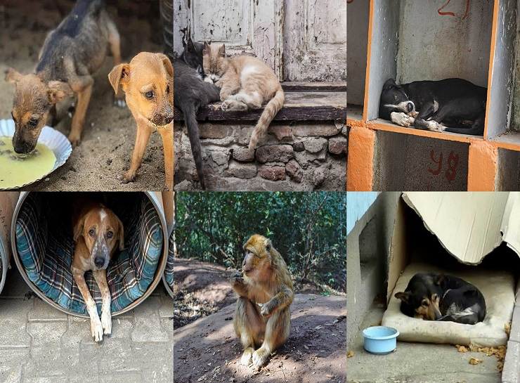 Angelus Shelter for stray Animals